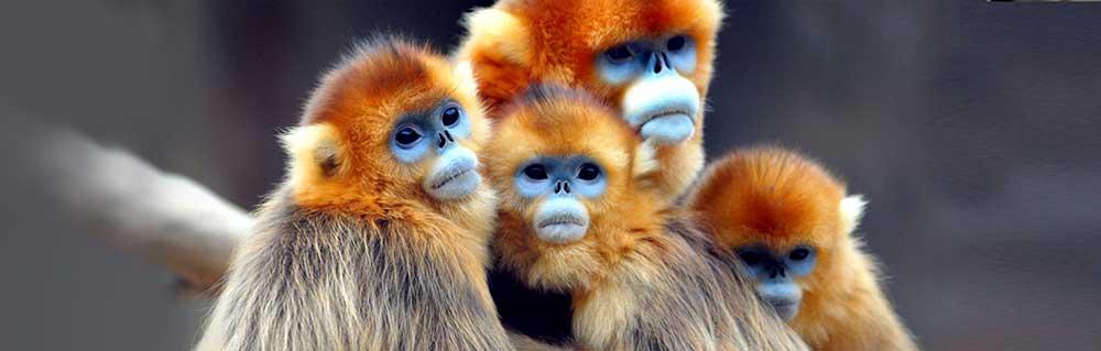 Everland resorts monkeys