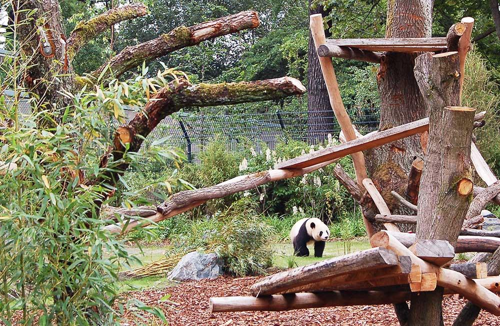 panda garden meng meng dan pearlman