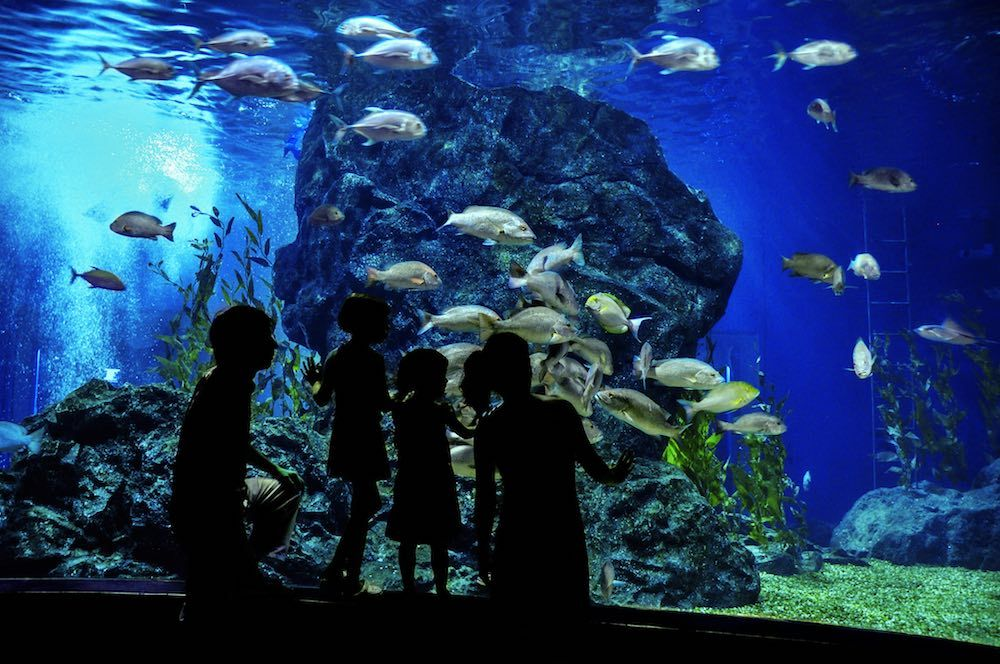 aquarium visitors