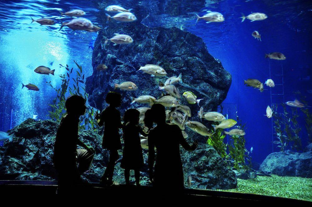 aquarium visitors