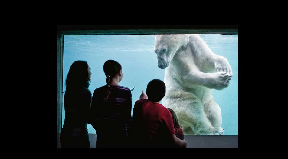 PDZA polar bear arctic tundra