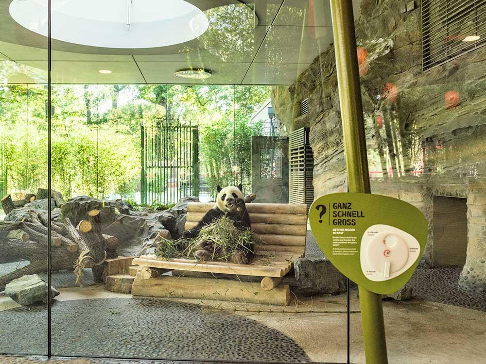 panda zoo dan pearlman