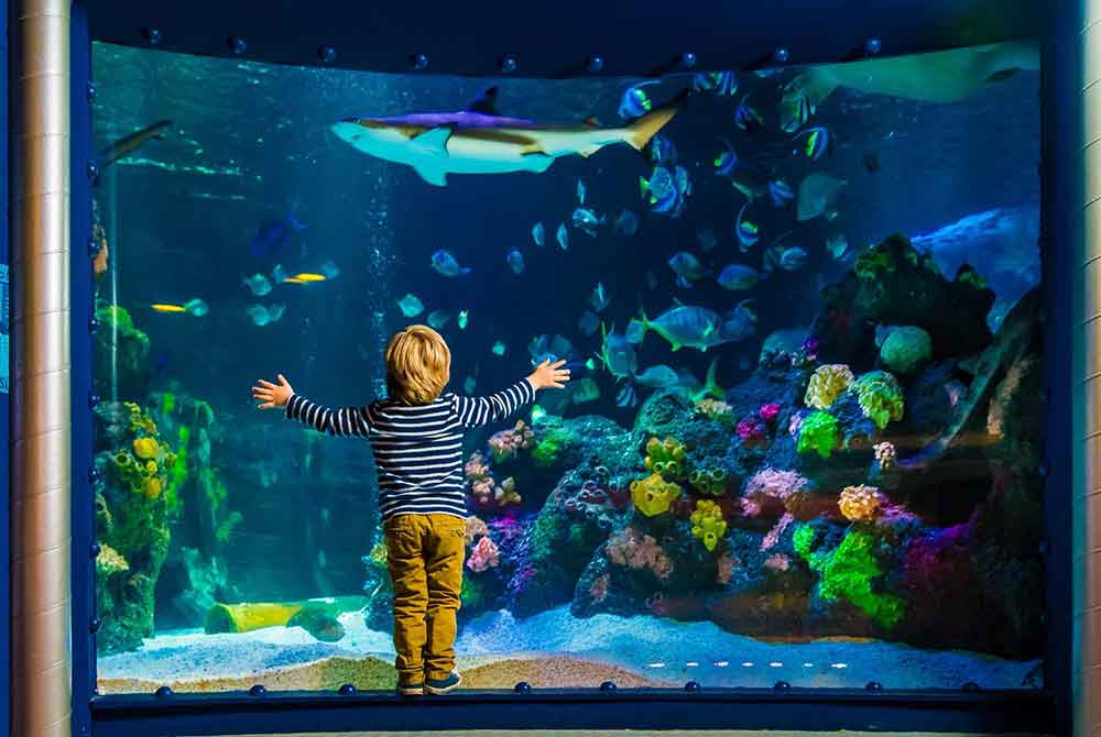 Sea life boy infront of fish aquarium