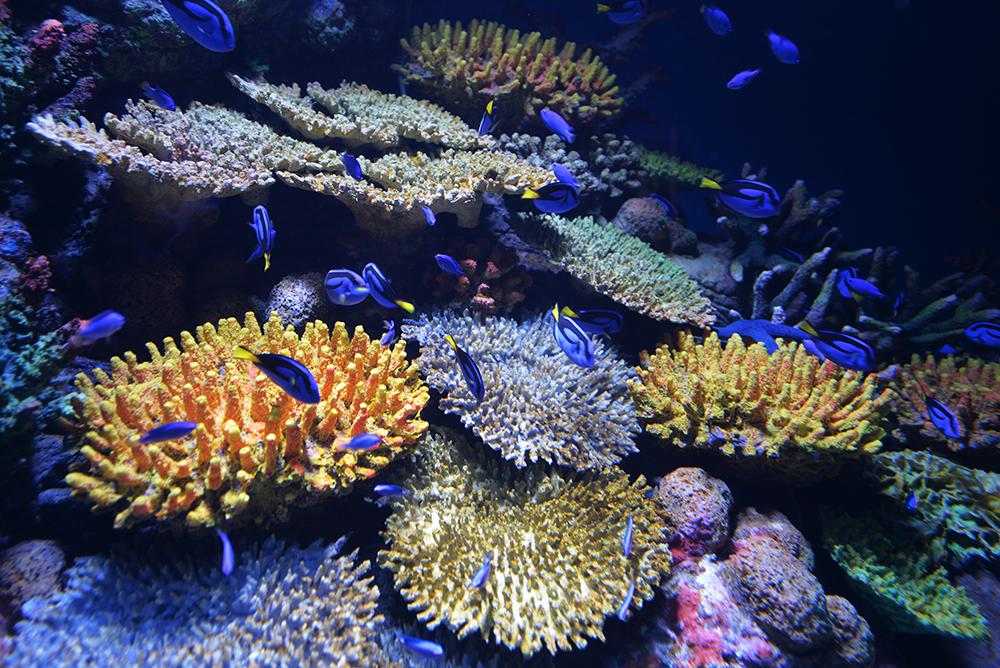 Cairns Aquarium blue dory fish tank barrier reef