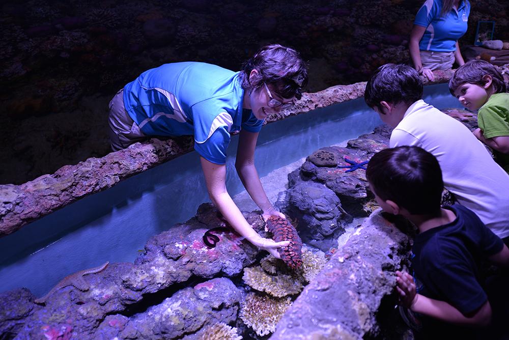 Cairns Aquarium handling zone aat