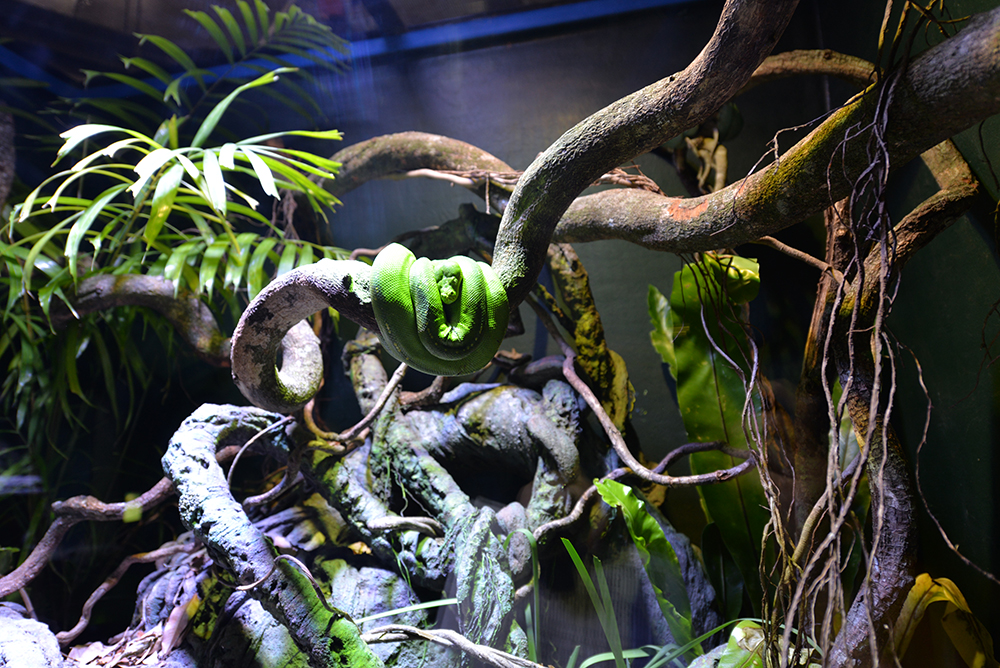 green-snake-cairns-aquarium