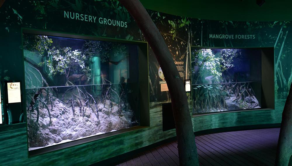 Cairns Aquarium conservation