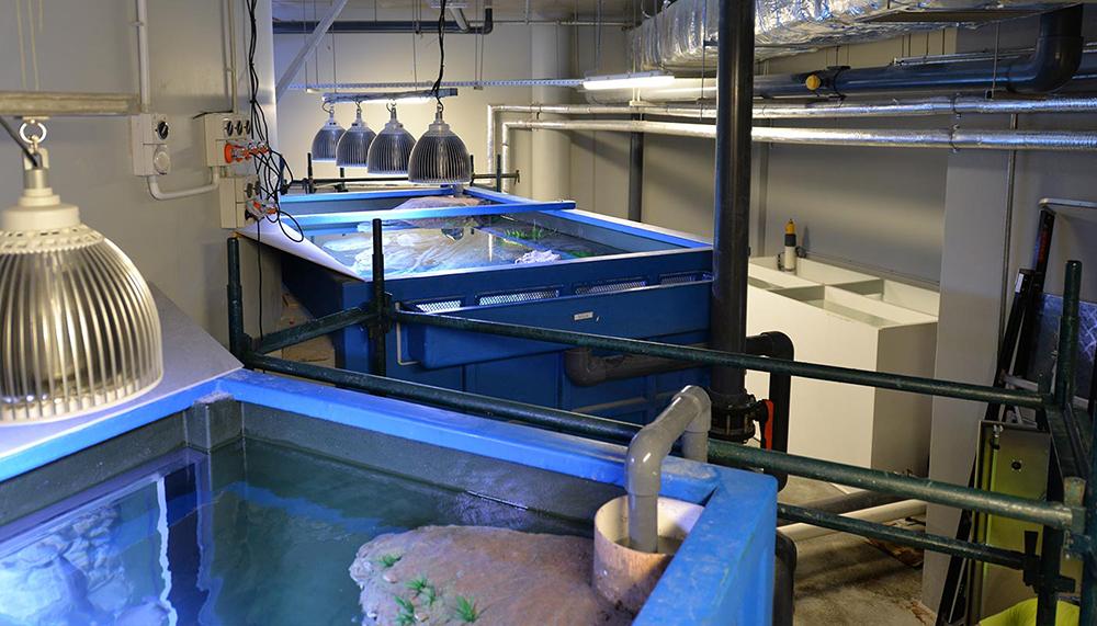 Cairns Aquarium tanks