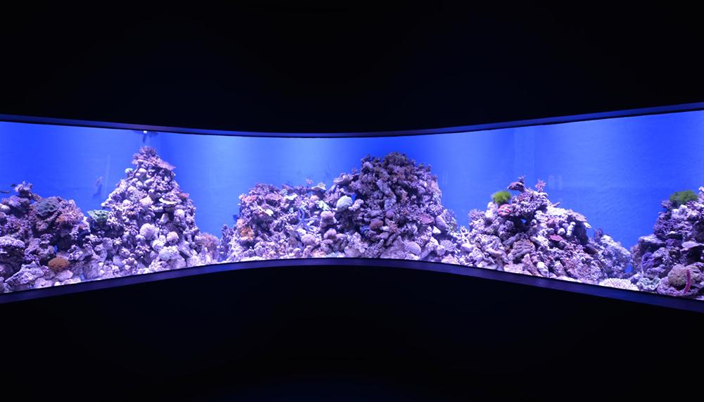 Cairns Aquarium AAT