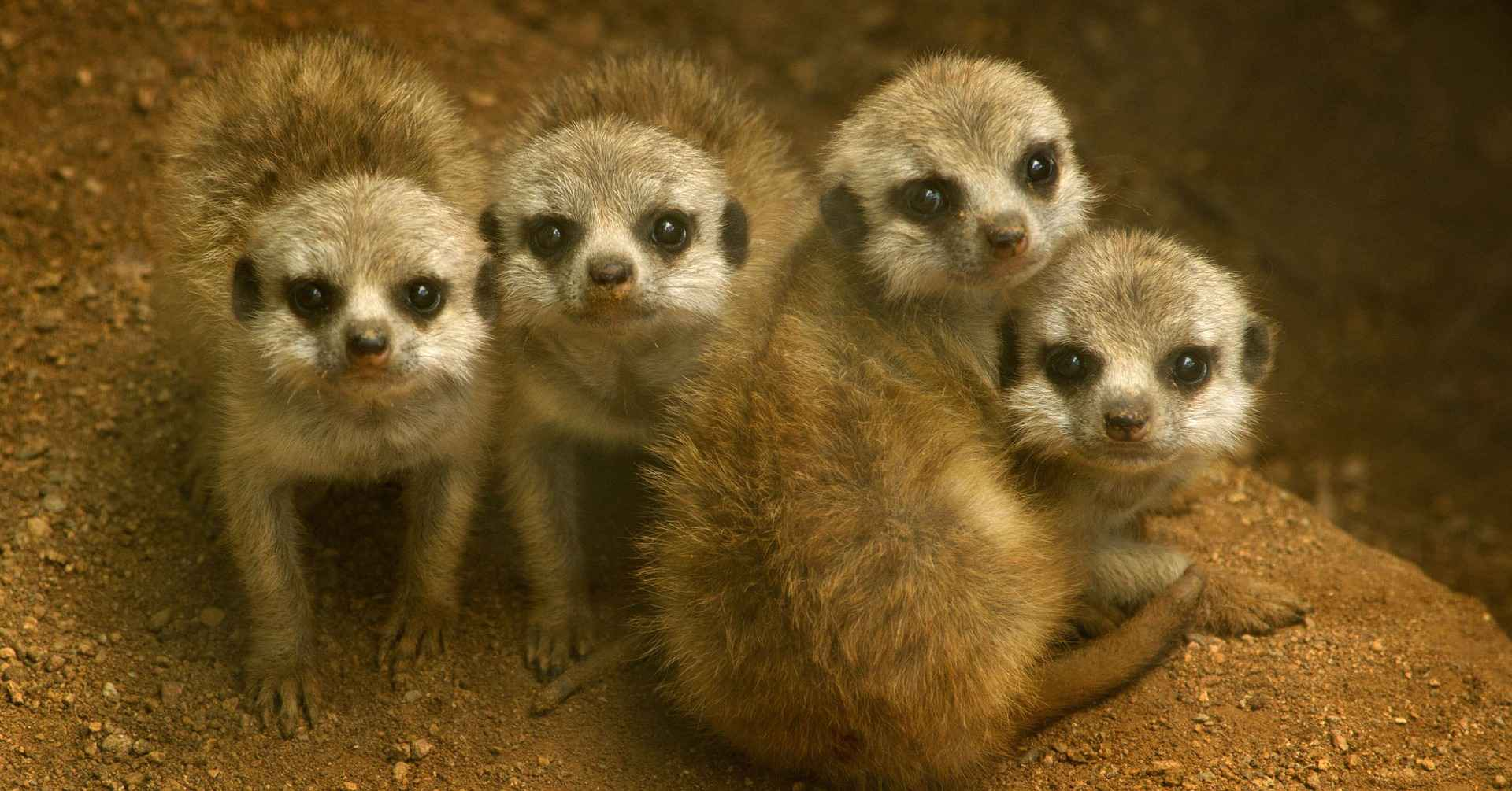 Heritage lottery funding means green light for Redbridge zoo
