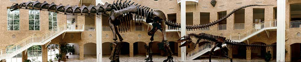 dinosaur atrium Fernbank Museum of Natural History