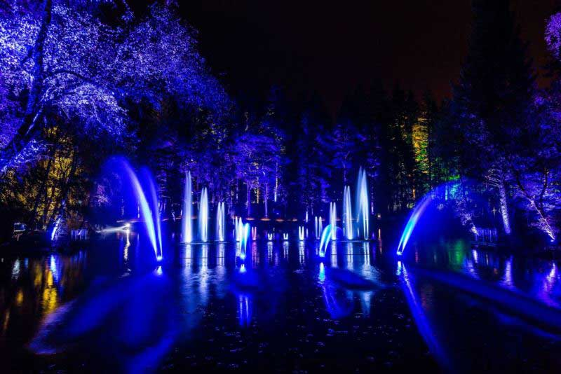 Enchanted Forest Oir an Uisge photography by angus forbes belisama