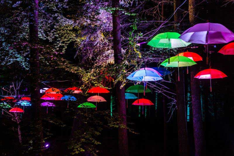 Enchanted Forest Oir an Uisge Photography by Angus Forbes