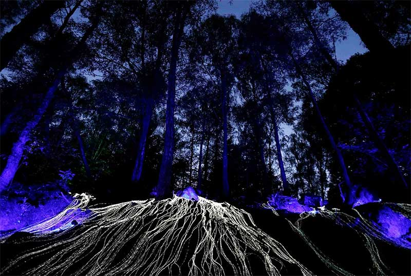 Enchanted Forest Oir an Uisge Photography by NL Productions