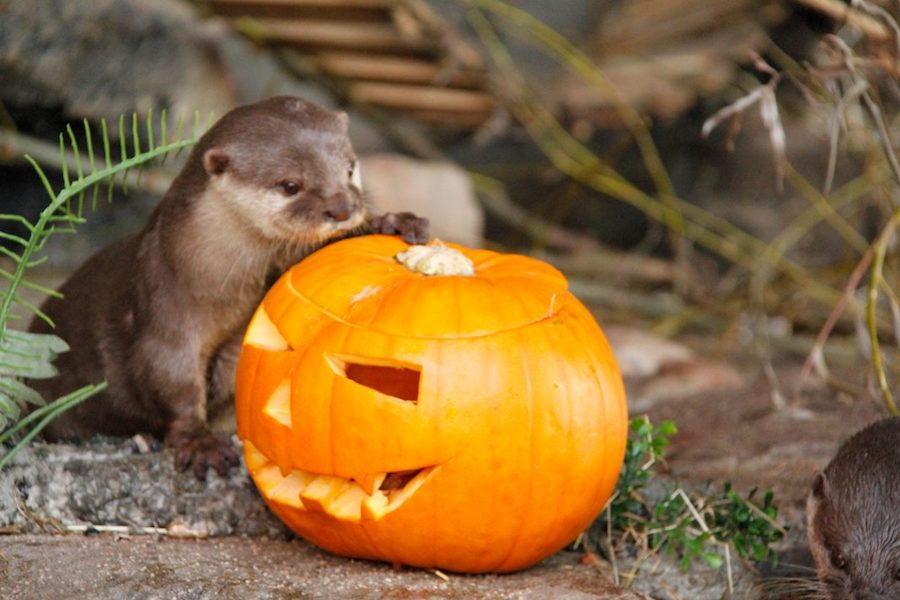 sealife halloween otter