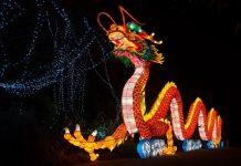 chinese dragon Dublin Zoo Ireland