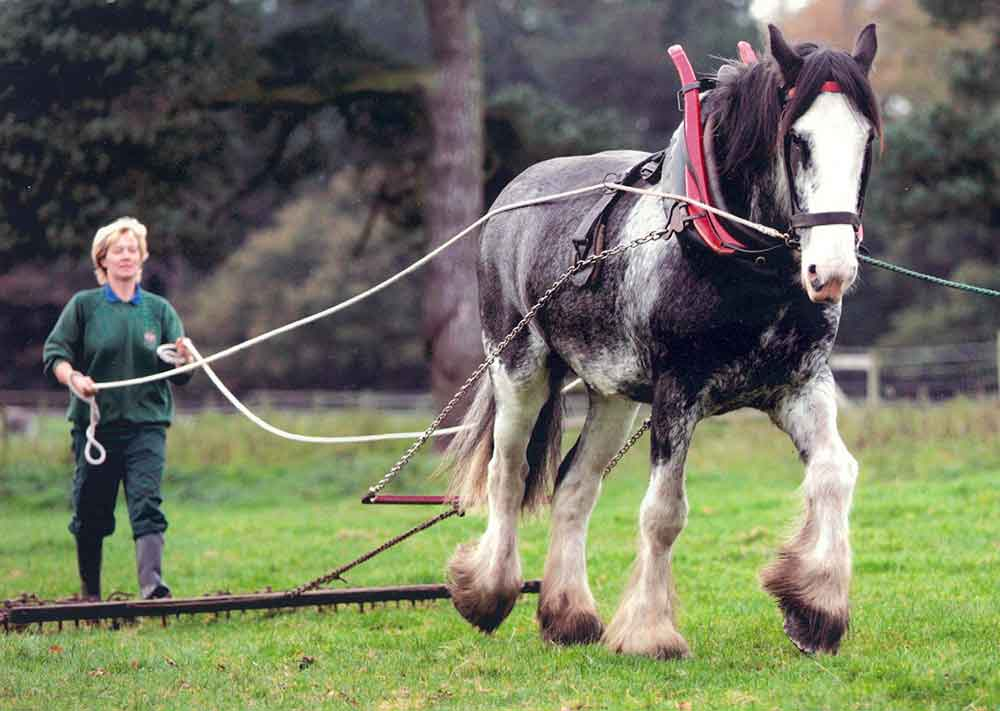 field to fork tatton park cart horse
