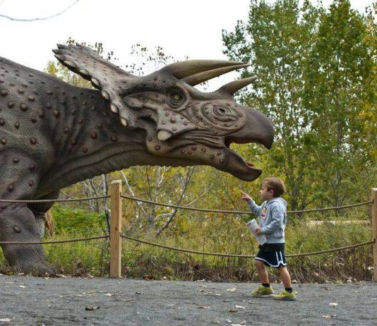 Field Station: Dinosaurs triceratops