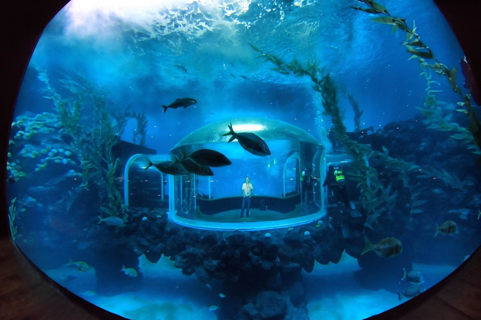 Poema del mar aquarium opens at loro parque gran canaria for Aquarium poema del mar
