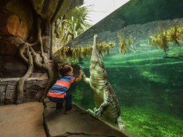 chester-zoo-frankie-the-sunda-gharial-crocodile a