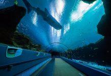 Georgia Aquarium. Major Expansion. Expansion 2020. SunTrust Pier 225