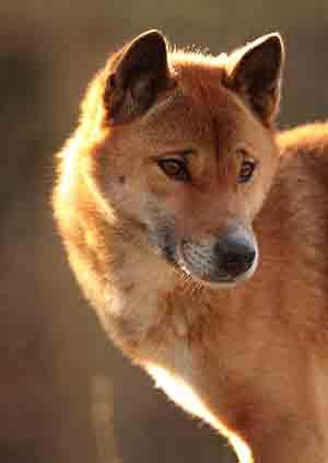 cota singing dog exmoor zoo