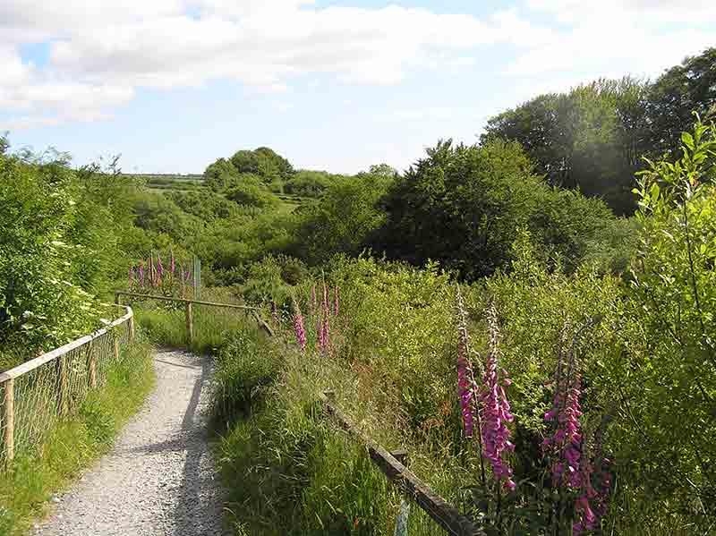 wildlife exmoor zoo pathway