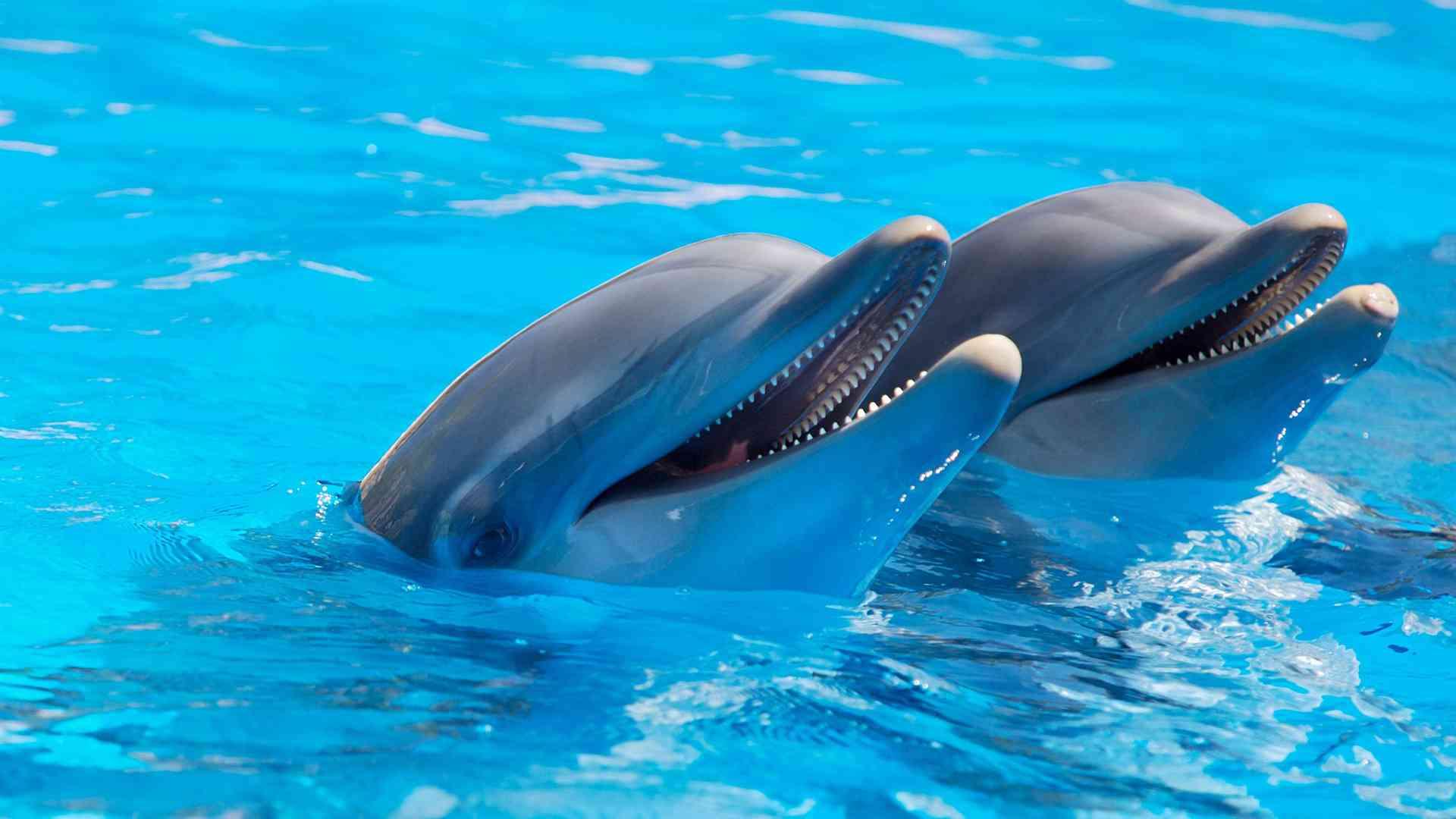 Dolphins. Killer whales. France. Breeding. Ban.