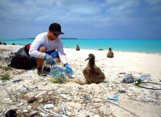 man disentangles a baby albatross from marine litter world oceans day