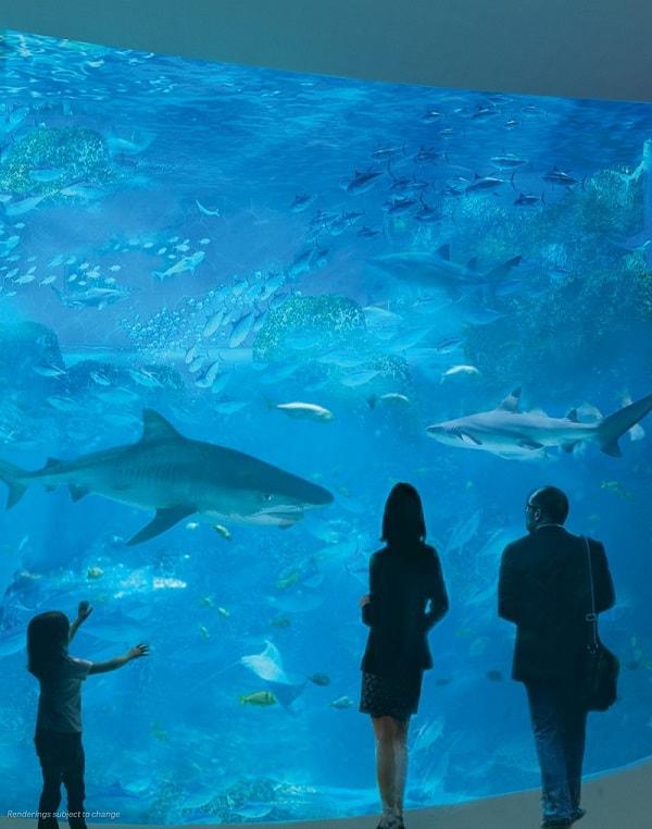 Mote marine lab. Mote. Aquarium. Florida.
