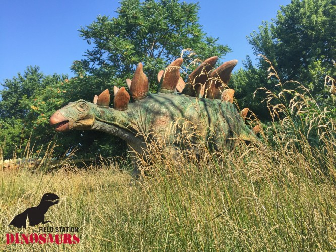 A Stegosaurus at Field Station Dinosaurs