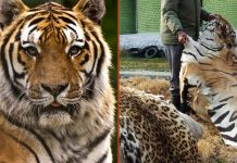 Association of Zoos and Aquariums acquires US Wildlife Trafficking Alliance