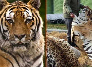 USWTA. AZA. US Wildlife Trafficking Alliance. Association of Zoos and Aquariums.