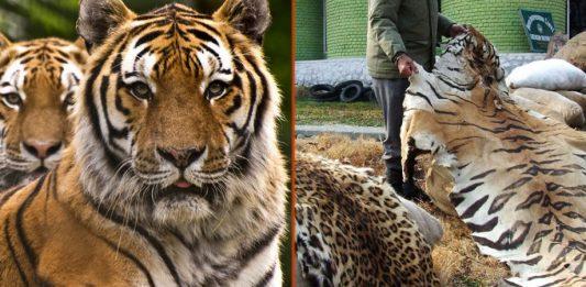 USWTA. AZA. US Wildlife Trafficking Alliance. Association of Zoos and Aquariums.