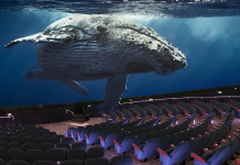 Maui Ocean Center breaks ground on whale exhibit and dome theatre