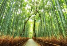 bamboo forest sustainability safari thatch grasssbuilt