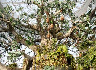 the green planet biome city walk dubai zooceanarium a