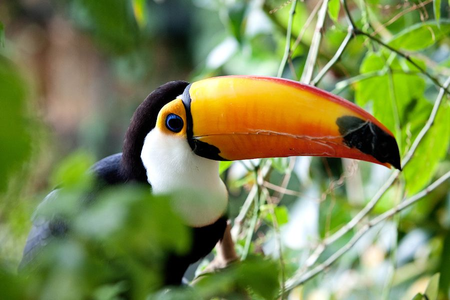 Toucan.at the green planet dubai (1)