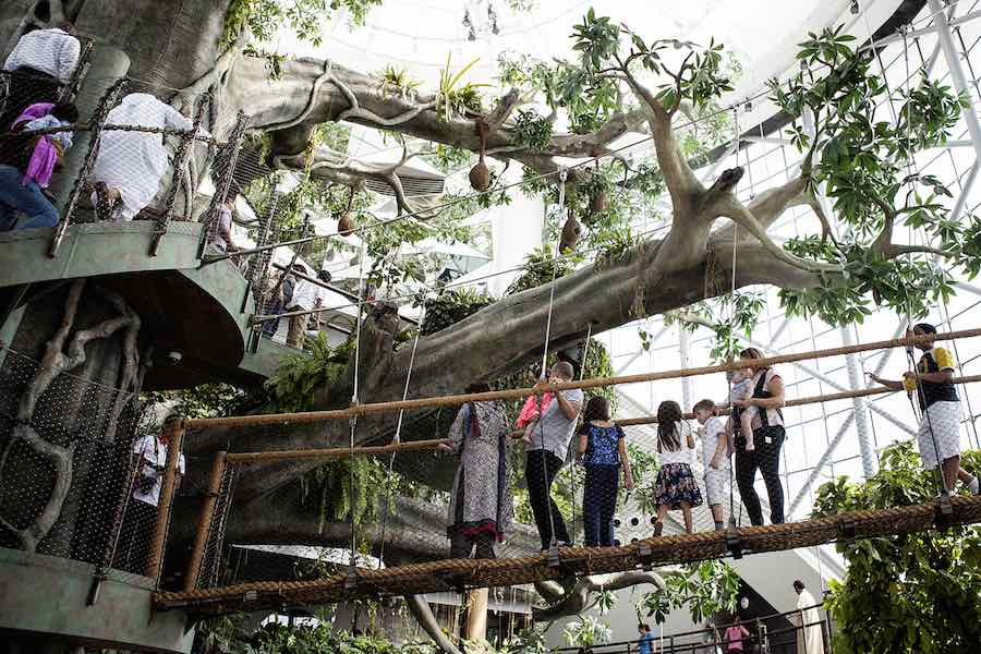 Biome treetop canopy the green planet dubai a