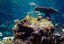 fish swimming in coral reef clear reef marine conservation