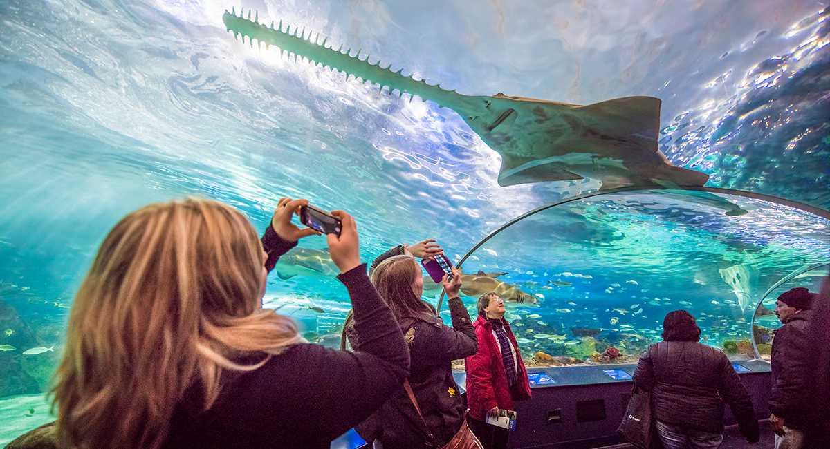 ripley aquarium visitors in glass tunnel