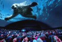 euromax polar bear giant dome cinema