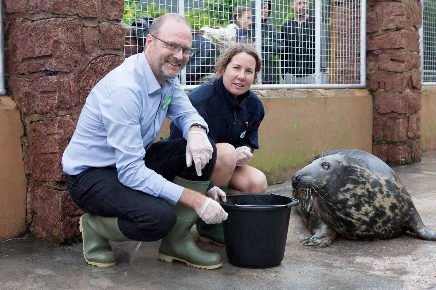 andy bool of seal life trust with seal at cornish seal sanctuary