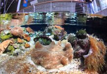 shallow_reef steinhart aquarium (Will Love © 2014 California Academy of Sciences) a