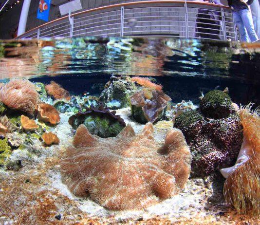 shallow_reef steinhart aquarium (Will Love © 2014 California Academy of Sciences) a