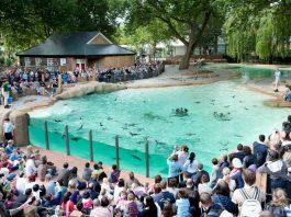 penguin beach at zsl london zoo