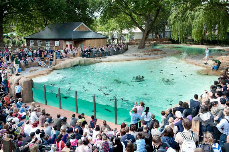 penguin beach at zsl london zoo
