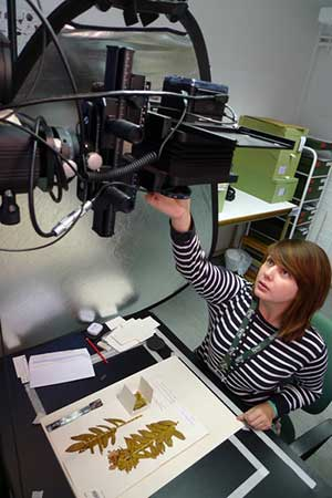 digitising specimens kew gardens scientist