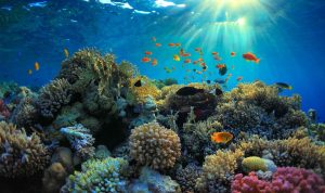 coral reef in sunlight marine research