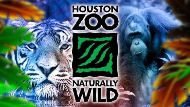 Houston Zoo colorful title with a tiger and chimpanzee in the background
